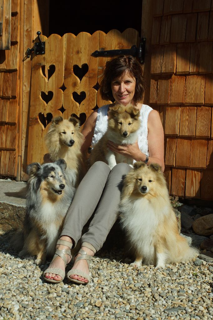 My First Sheltie Was Born In 1984 Sheila A Mahogany Sable Female From Germany She Great Pet But Not Suitable For Showing As I Had Hoped